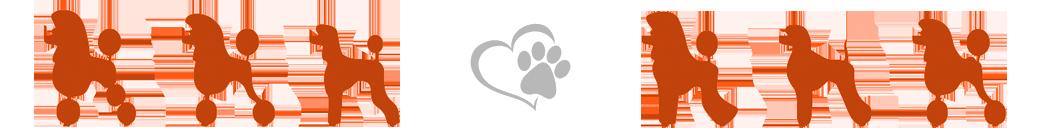 O nama - hotel i salon za ulpešavanje pasa