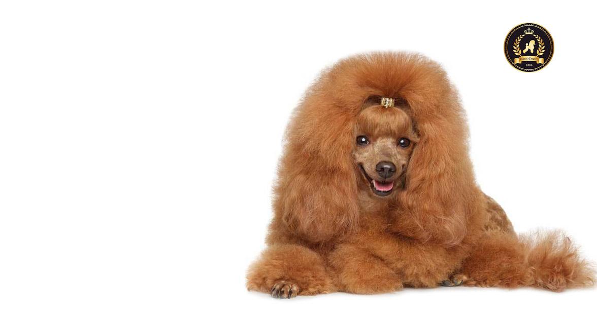 O nama - hotel i salon za ulepšavanje pasa Dogs Empire Novi Sad