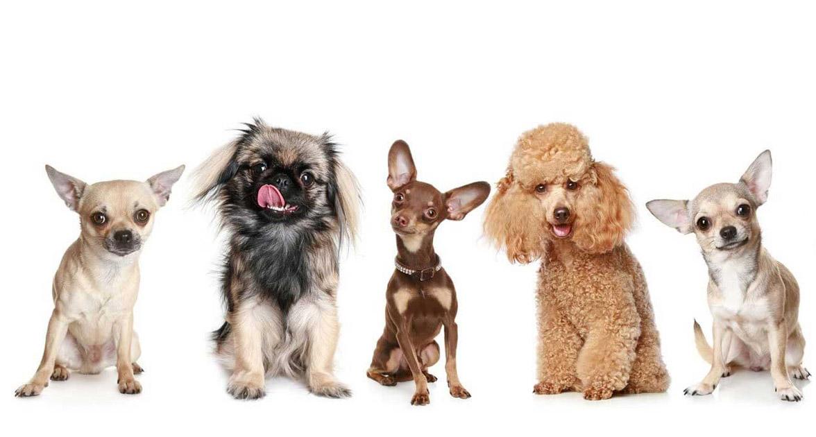 Pocetna - Hotel i salon za ulepsavanje pasa - Dogs Empire Novi Sad