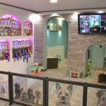 Galerija - hotel i salon za ulepšavanje pasa Dogs Empire Novi Sad