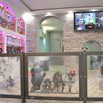 Usluge - hiotel i salon za uepšavanje pasa Dogs Empire Novi Sad